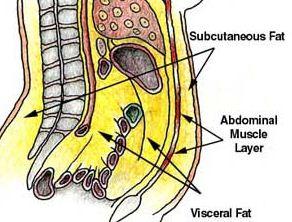lemak perut