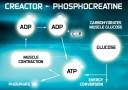 Creactor Creatine